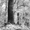 V lese na Dúbravskej hlavici...