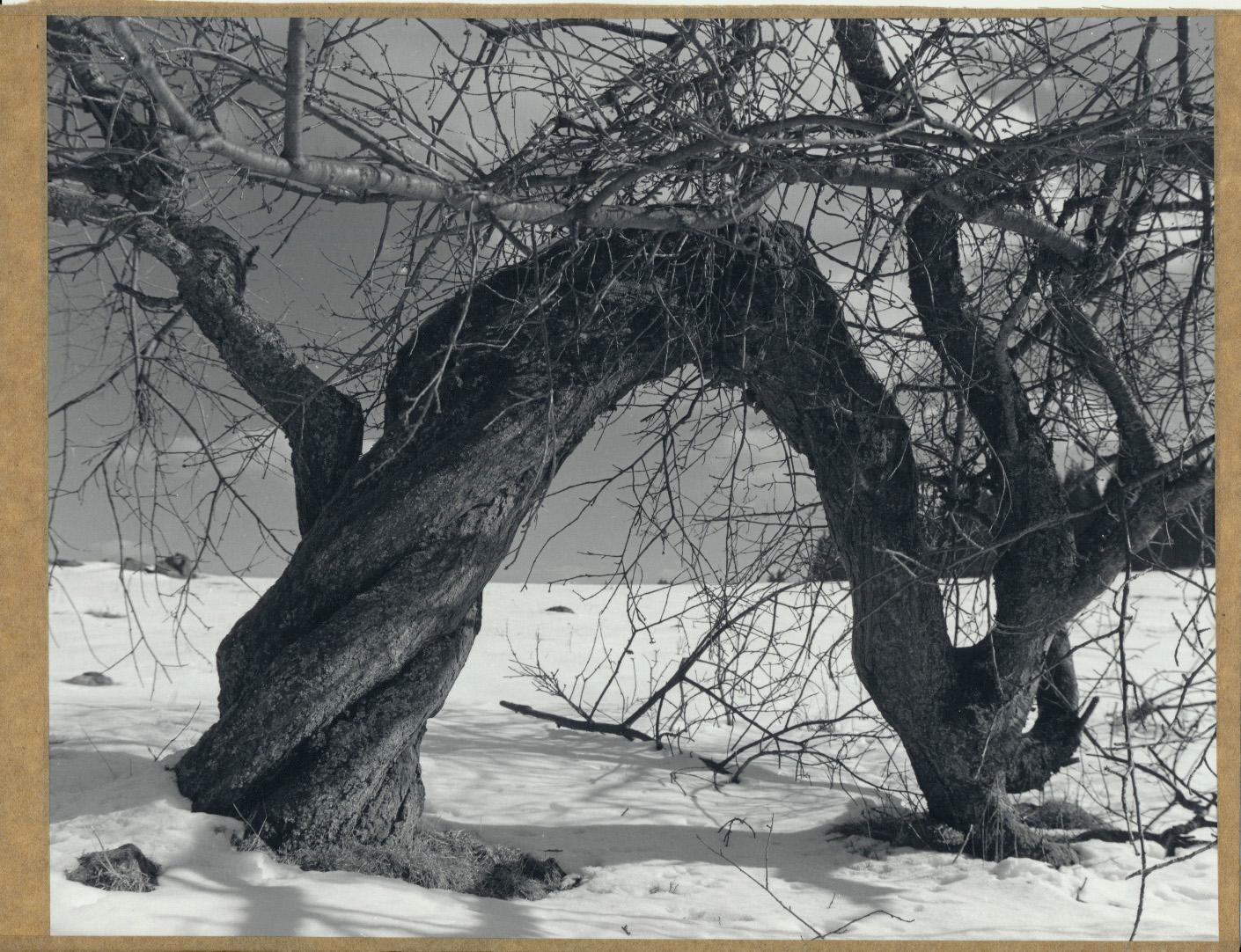 Těžký život - Bývalé Dolní Lazy zima 2014 - Fomabrom112C/Foma GD-L (18x24cm)