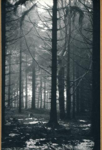 Dylešký les