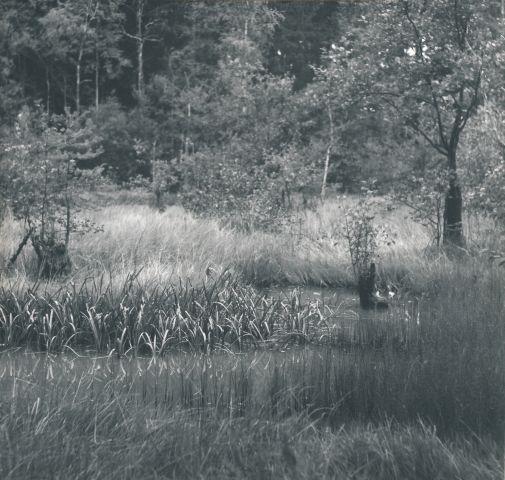 Rybník na Drmoulském potoce