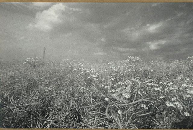 U Jesenice před bouří