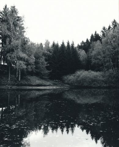 Boršegrýn