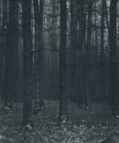 V lese nad Holubínem