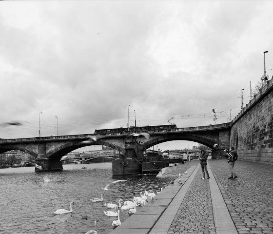 Krmení pražských dravců